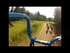 Dryland Dog Sledding