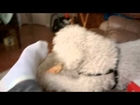Cute Dog Hates Smelling Smelly Feet