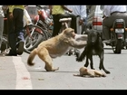 ANIMAL RESCUE OTHER ANIMALS #1 / Amazing Animals Rescued From Certain Death