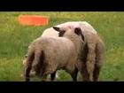 Farm Love Animal Funny Mating Animals .