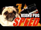 Speed With a Pug