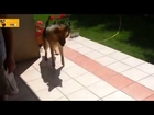 Top 10 Funny 2014  Dog Videos Compilation - 720p - HD