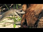 Africa's Most DANGEROUS SNAKE - Black Mamba Snakes - Wildlife Documentary - NEW+ Full Documentary
