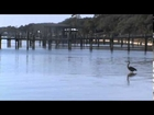 Winter 2014 Perdido Key Florida Awsome Weather. Great Blue Heron