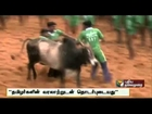 Tamilnadu Government files review petition on Jallikattu issue