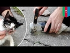 Animal rescue stories: Kitten's head freed from a jar - TomoNews