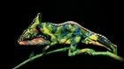 Caméléon en body-painting